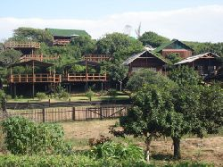 Mozambique Accommodation - Coconut View